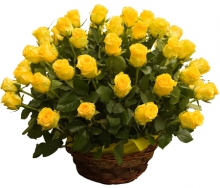 50 Yellow Color Roses Basket
