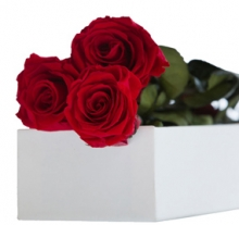 3 Elegant Red Roses in Box