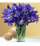 12 Purple Iris Flowers in a Glass Vase