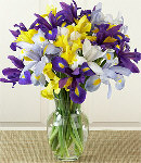 12 Mixed Iris Flowers in a Glass Vase.