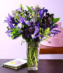 12 Purple Iris Flowers w/ Greenery in a Glass Vase