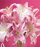 18 pcs Pink Lilies in a Vase