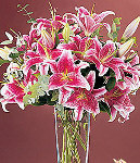 Two Dozen Pink Lilies in a Vase
