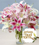 Two Dozen Mixed Pink & White Lilies in a Vase
