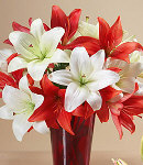 One Dozen Mixed Red & White Lilies in a Vase