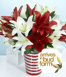 Two Dozen Mixed Red & White Lilies in a Vase