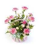 10pcs Pink Carnations  in a Basket