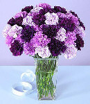 20 Mixed Purple Carnations  in a Vase